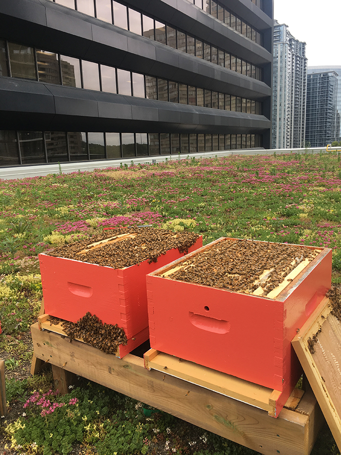 bee hives 1.jpg