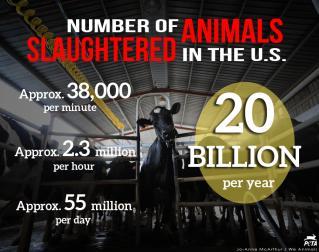 slaughtered animals.jpg