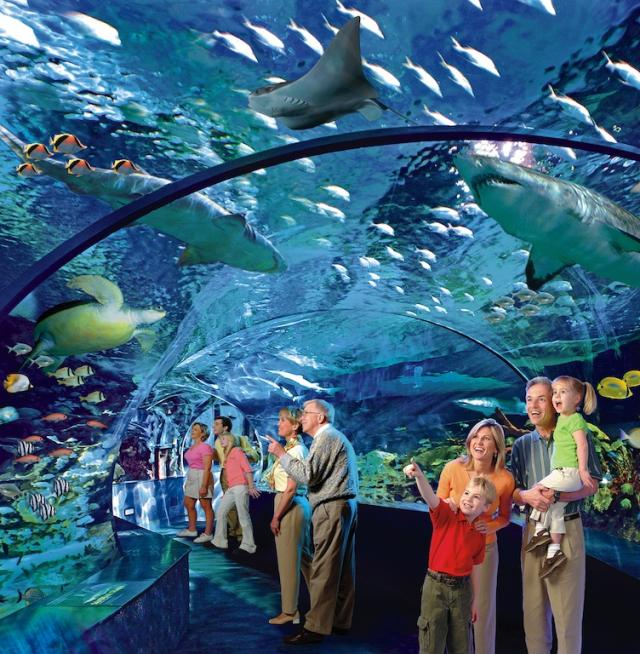 Shark Tank Tunnel