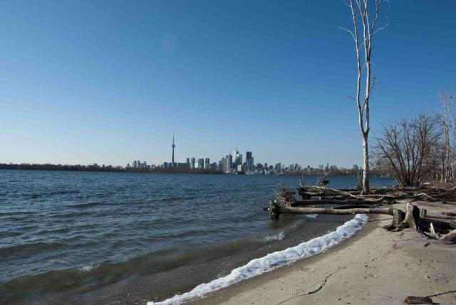 Toronto Skyline From The Leslie Spit