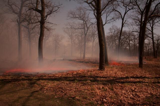 Controlled burn in High Park Black Oak Savannah, 2012, by Oliver Pauk
