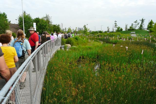 Exploring wetlands at Corktown Common park by Waterfront Toronto