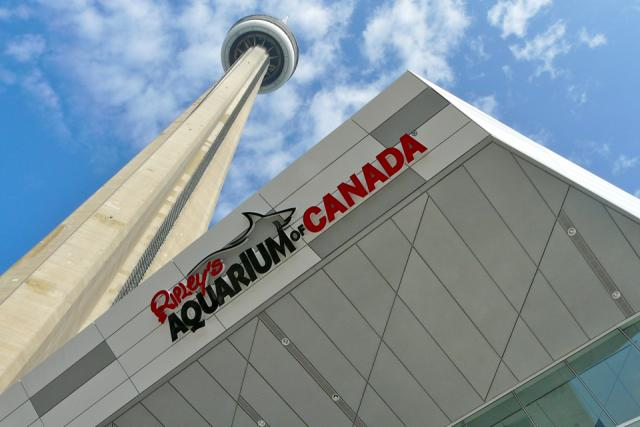 The new Ripley's Aquarium of Canada is located at the base of the CN Tower