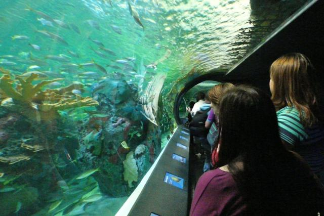 Dangerous Lagoon, including the 96m-long moving sidewalk, Ripley's Aquarium