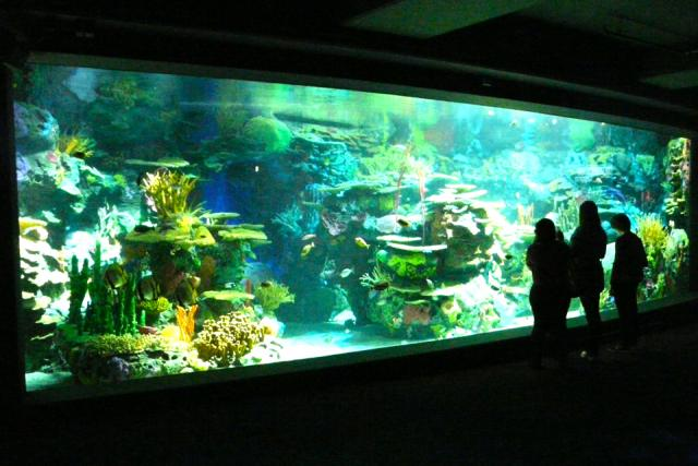 Rainbow Reef, Ripley's Aquarium of Canada, Toronto