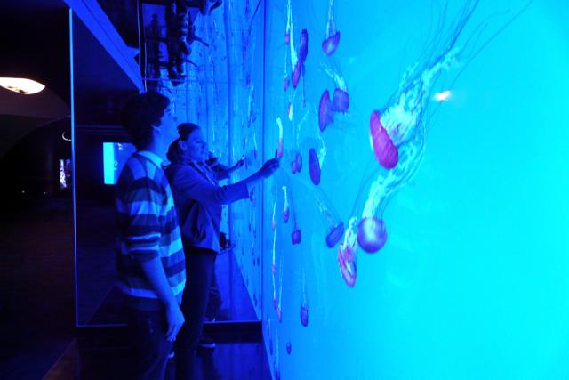 checking out the Pacific Sea Nettles, Ripley's Aquarium of Canad