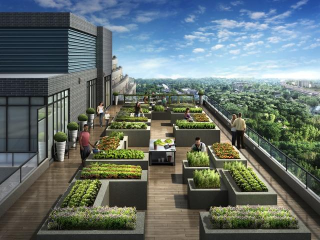 Gardening on the roof, NY2 Condos, image courtesy of The Daniels Corpor
