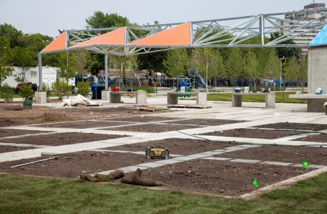 The last plantings are going in, Regent Park, Toronto