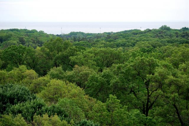 The treetops of High Park, Daniels' HighPark Condos, Diamond Schmitt, Toronto