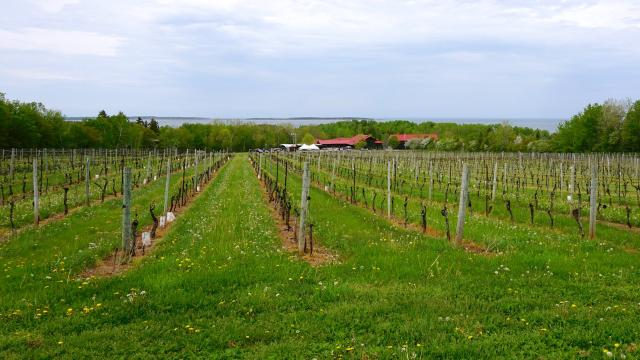 Jost Vineyards, Nova Scotia's largest winery, is just down the road