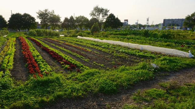Urban agriculture is part of Downsview Park's mandate, image by Craig White