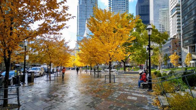 Photo of the Day, Toronto, Berczy Park, Claude Cormier + Associés